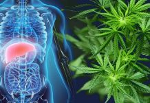 CBD Help in Liver Disease